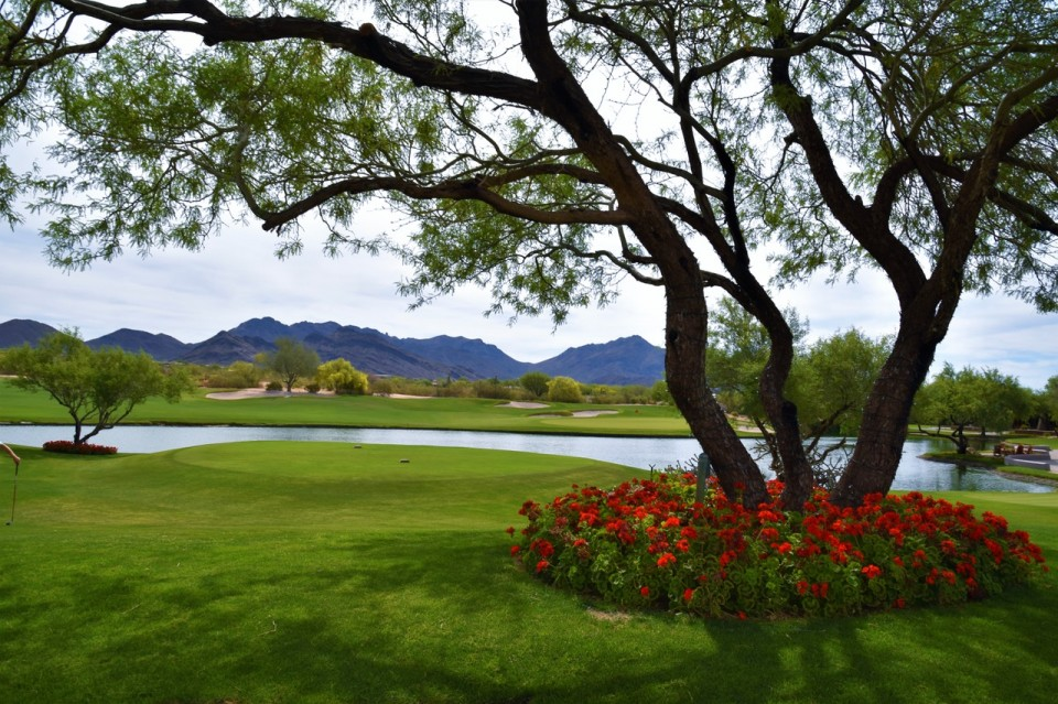 A Tree with flowers at Grayhawk | Christy Mooney Properties