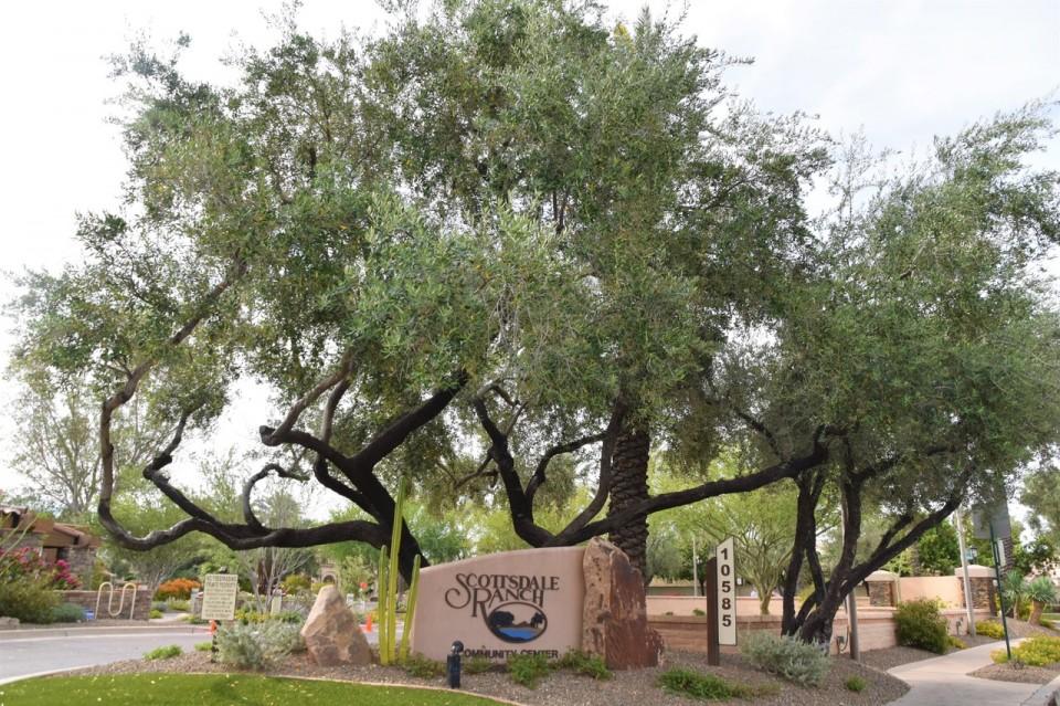 Scottsdale Ranch   Christy Mooney Properties